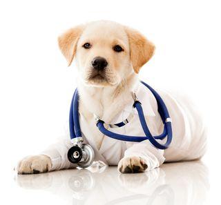 Gentle Heart Pet Clinic
