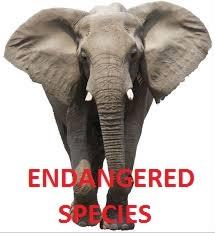 Conservative endangered species