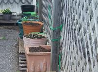 Asphalt Garden